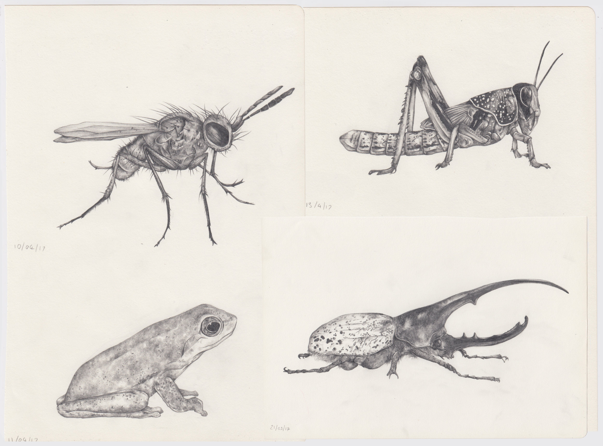 insect scans.jpg