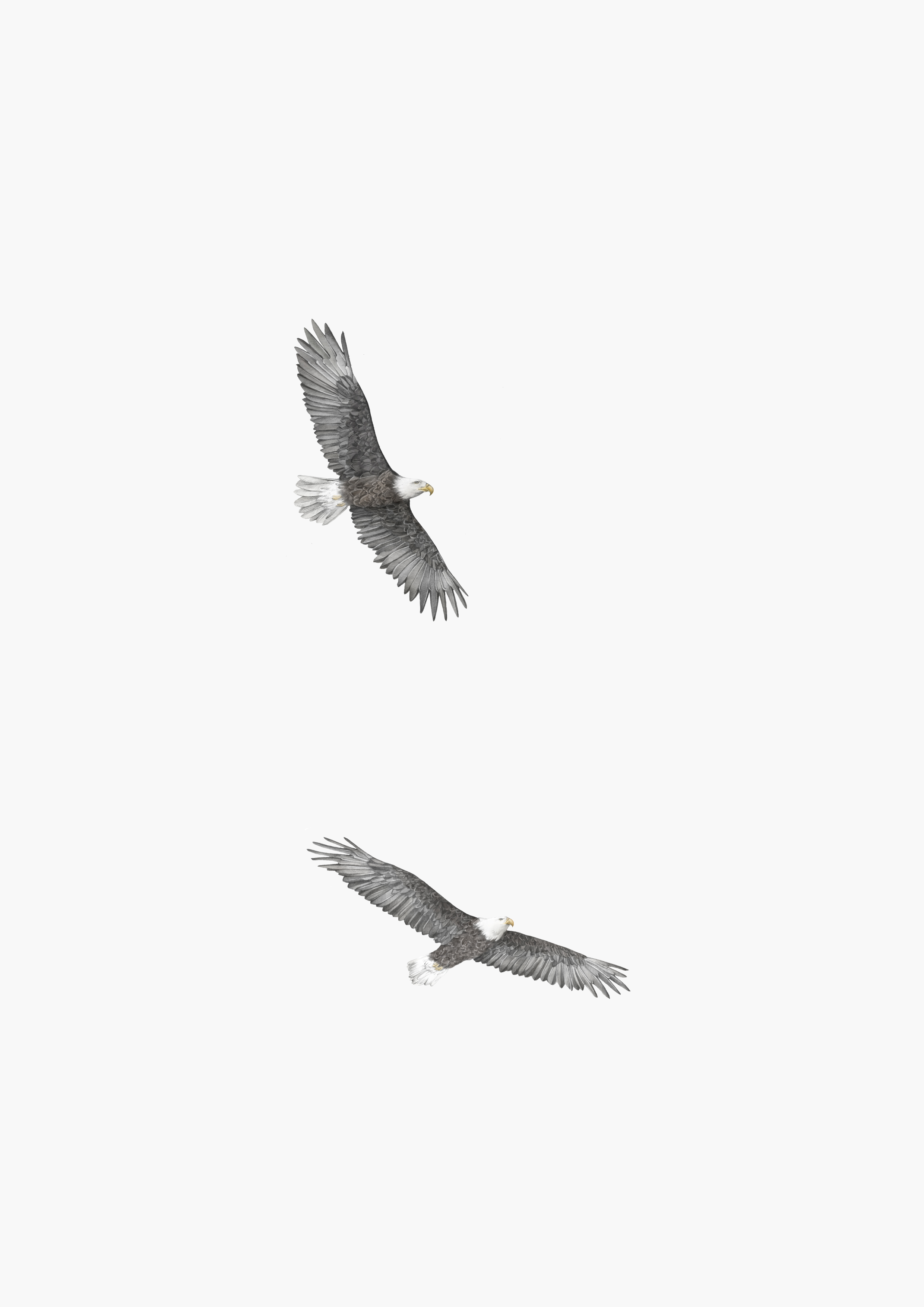 eagles a4 off white background.jpg
