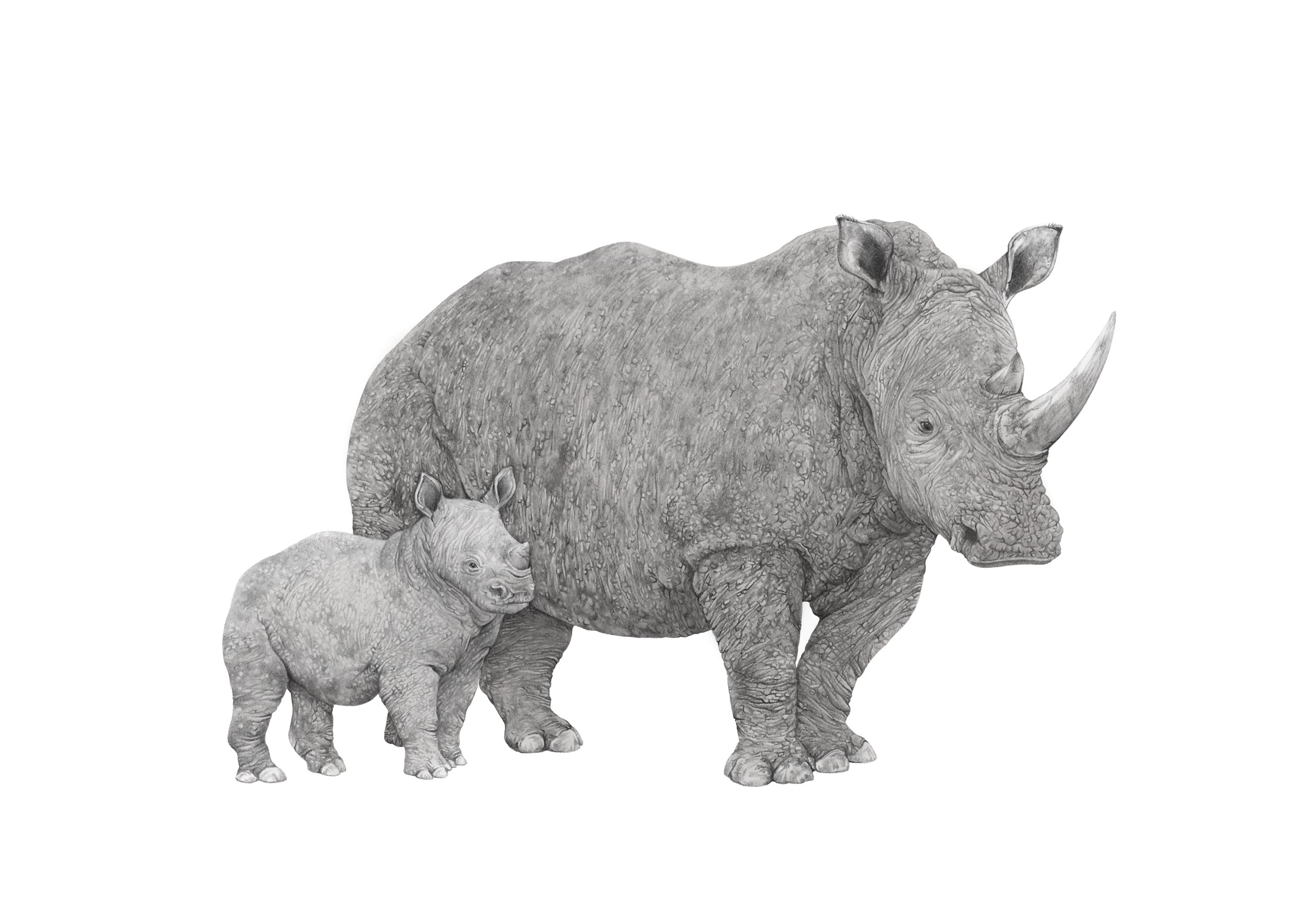 rhino mother a4 copy.jpg