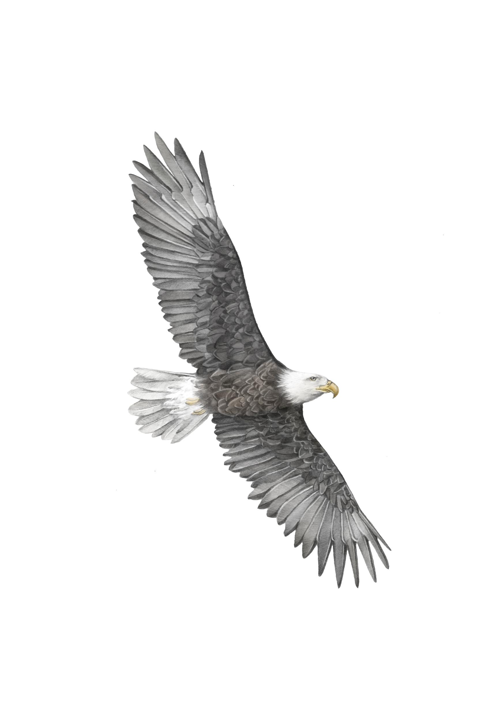 eagle 1 A5.jpg