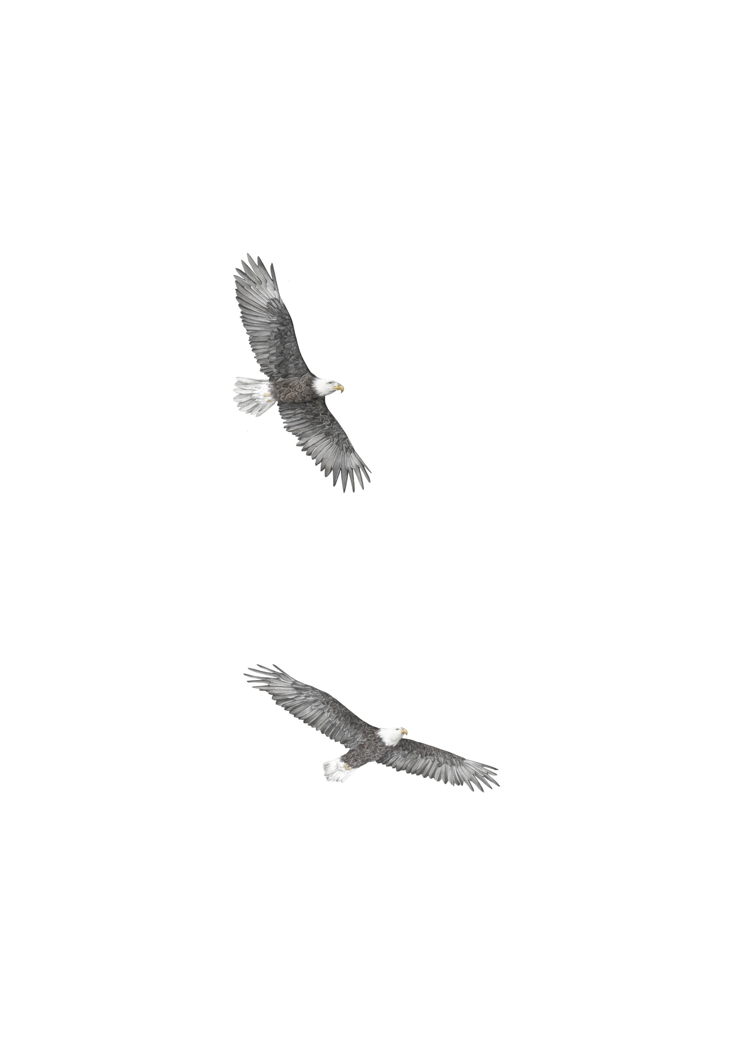 eagle a3.jpg