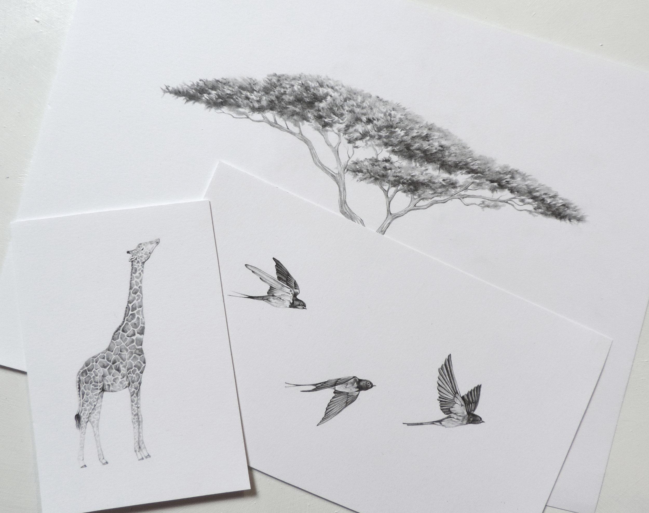 mitengo drawings.jpg
