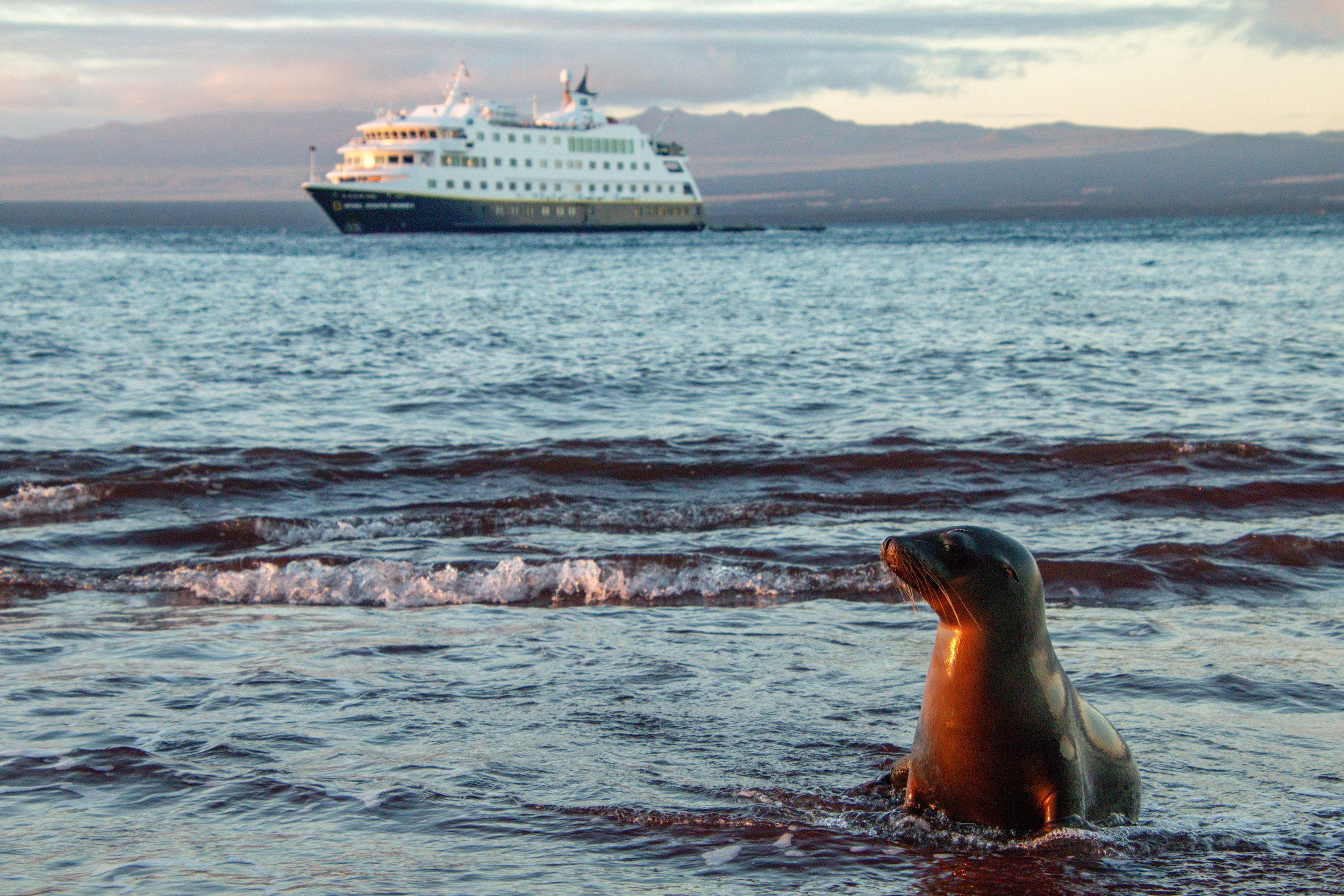 Sea Lion in the water with National Geographic Endeavour 2, Rabida Beach, Galápagos.