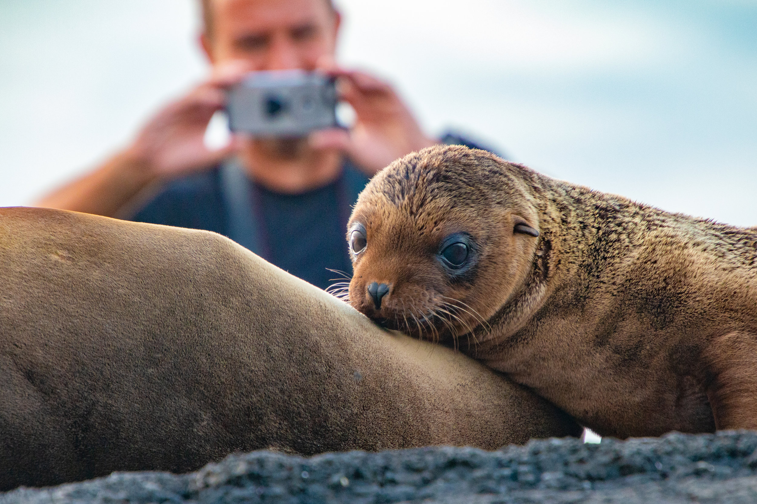 Photographer taking a shot of one of the many Sea Lion pups on the coast of Puerto Egas, Santiago Island.