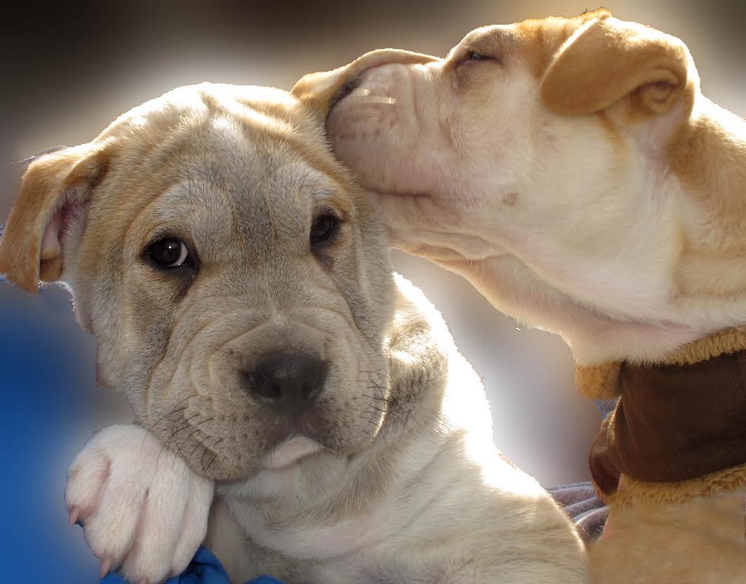 ~Wolfie& Bailey~ -