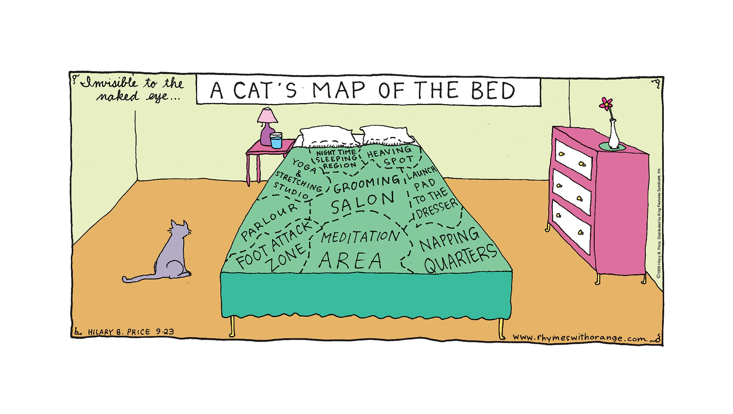CatsMapBed.jpg