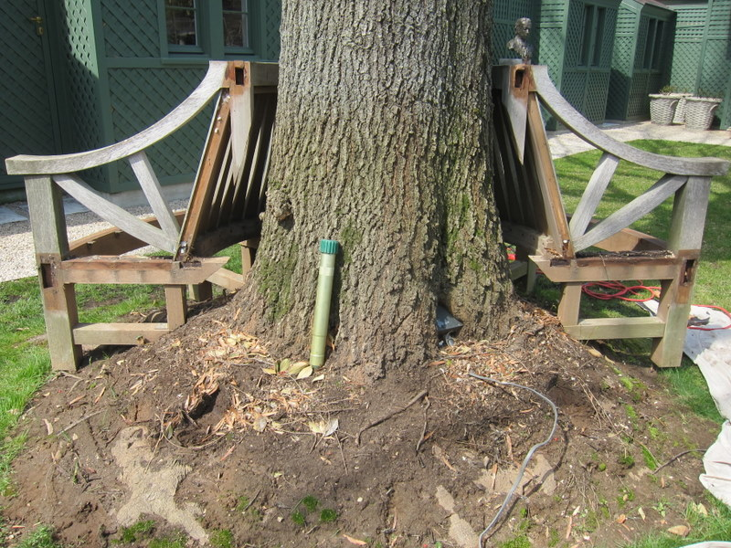 This section view shows the close relationship between bench and tree.