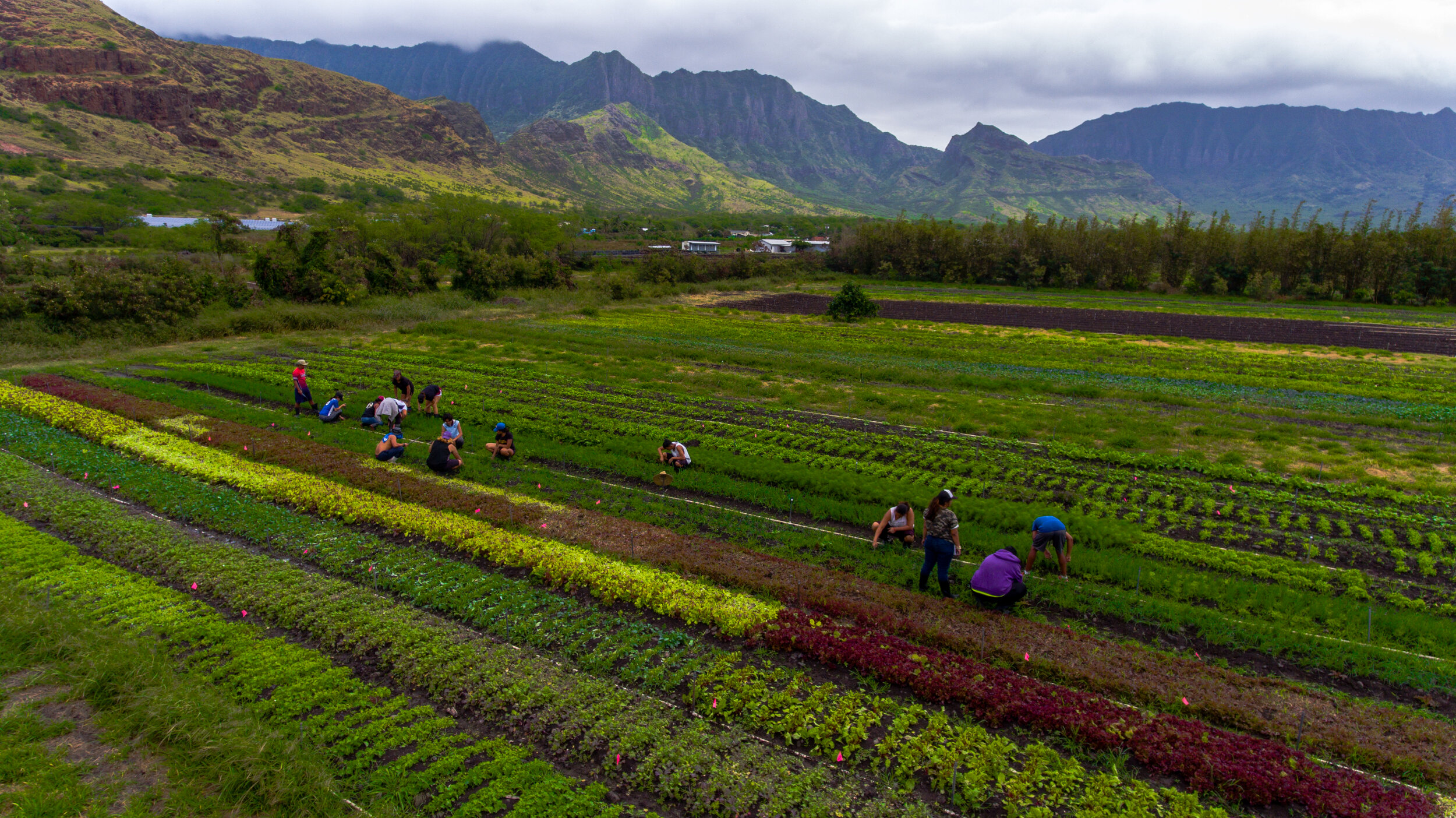 Jobs Ma O Organic Farms