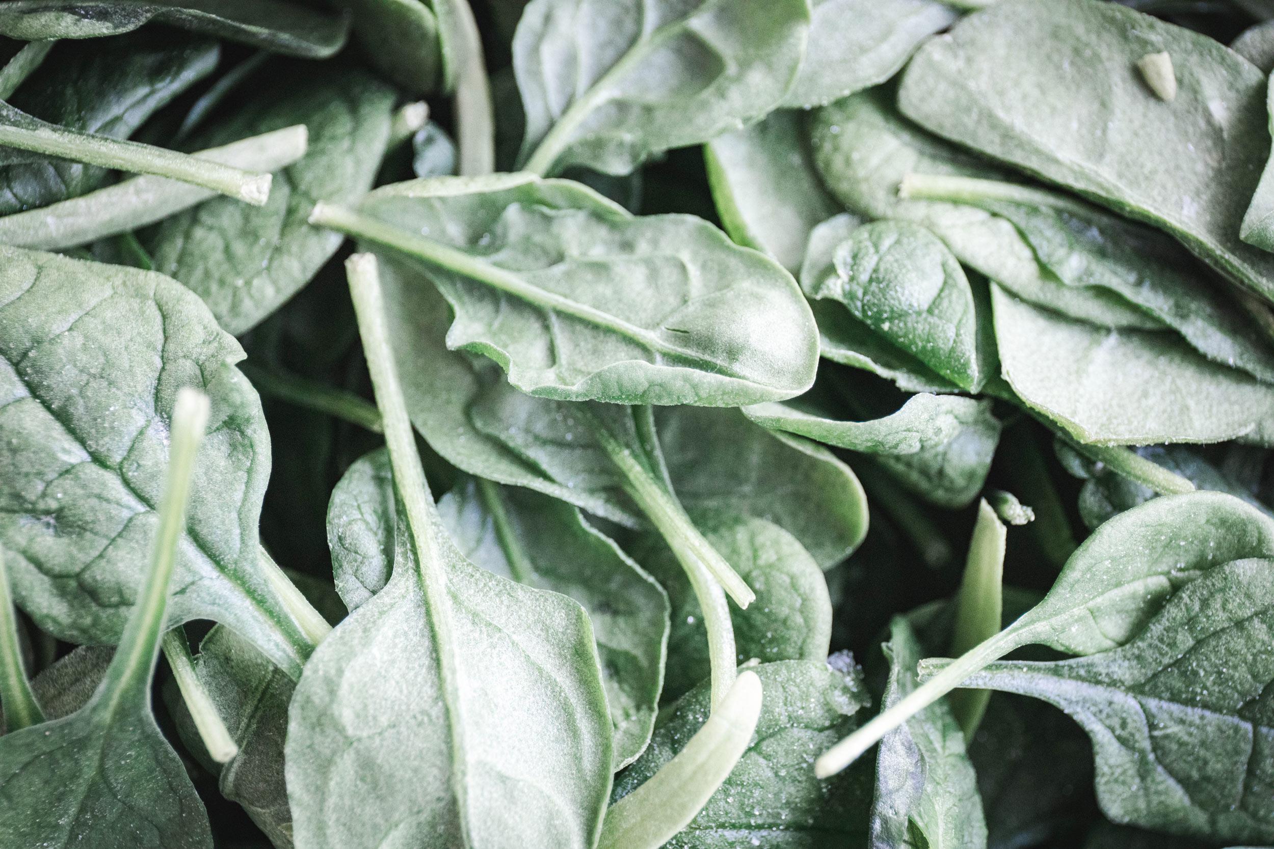 spinachbanner.jpg