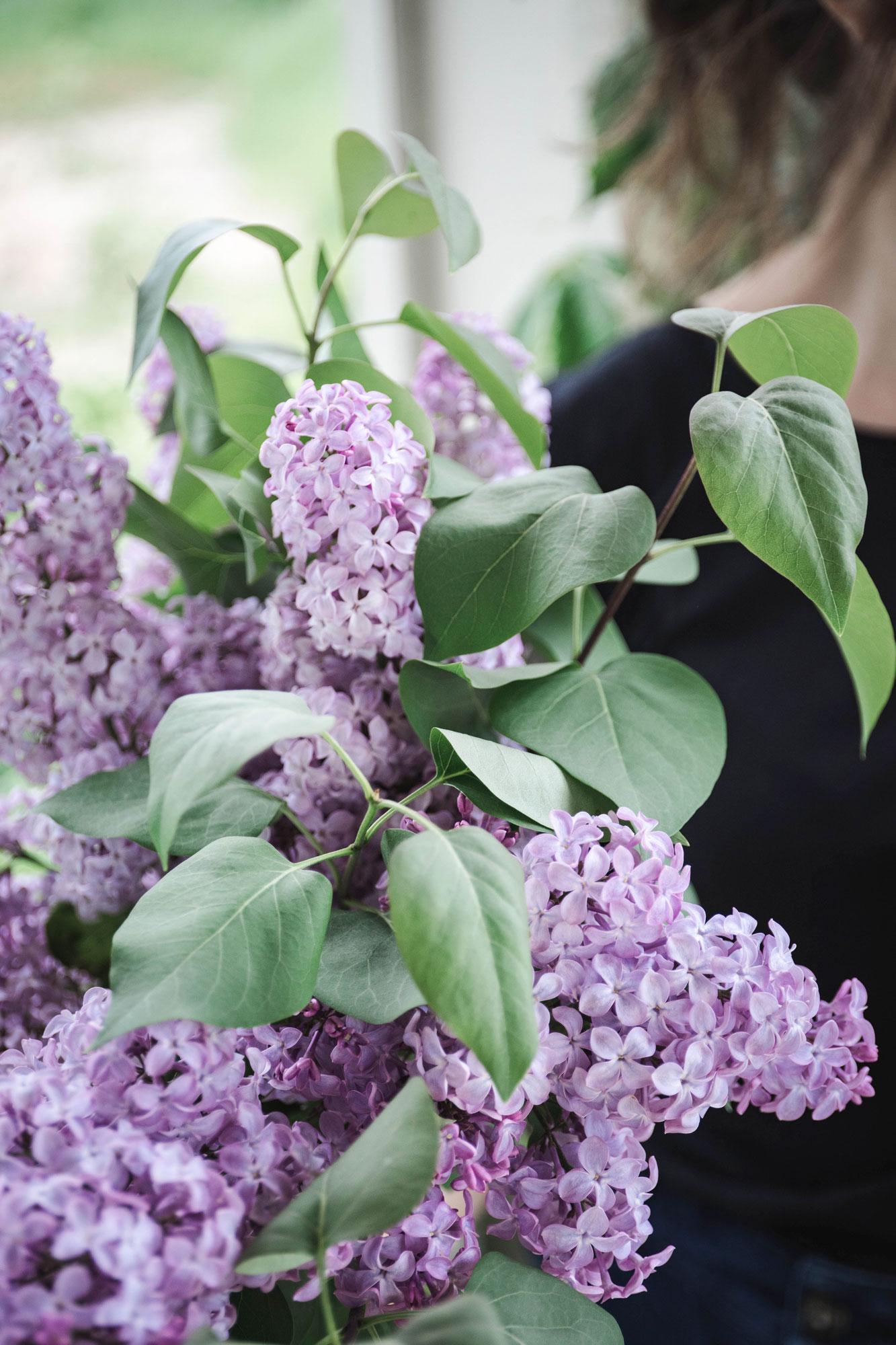 lilacs5web.jpg