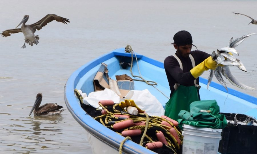A fisherman shows his catch at Carli Bay.