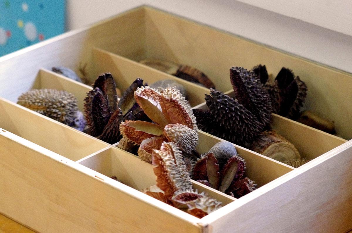 Rosellas Community Preschool seedpods and wooden nature play.jpg
