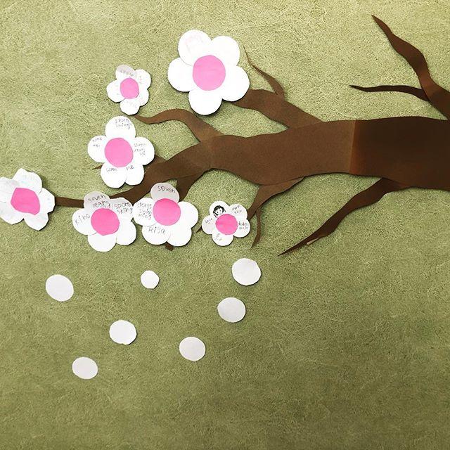 桜は山形市に満開超えたけどワシの教室に桜がいっぱい咲いてます。これからもっと出てくる! #abcenglishschool #桜 #tbl #yamagata #letslearnenglish #英会話 #kidscrafts