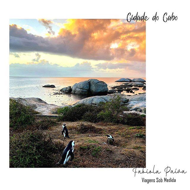 """Que tal uma visita na face leste da Península do Cabo? Com cerca de 2 mil pinguins africanos, ela atrai turistas de todas as partes do mundo interessados em vê-los de perto e até interagir com eles. A praia (de areia branquinha e águas calmas e cristalinas) que abriga uma grande colônia de pinguins desde os anos 80, é um diferencial que atrai nosso desejo de experiência. """"Vivo experiências e as indico."""": 34 99971.0040 (Whatsapp)  #FabiolaPaiva #FabiolaPaivaTur #ViagensSobMedida #Experiencia #Família #ViagememFamília #trip #agentedeturismo #Viagem #CidadedoCabo #Africa #Praias #pinguins"""