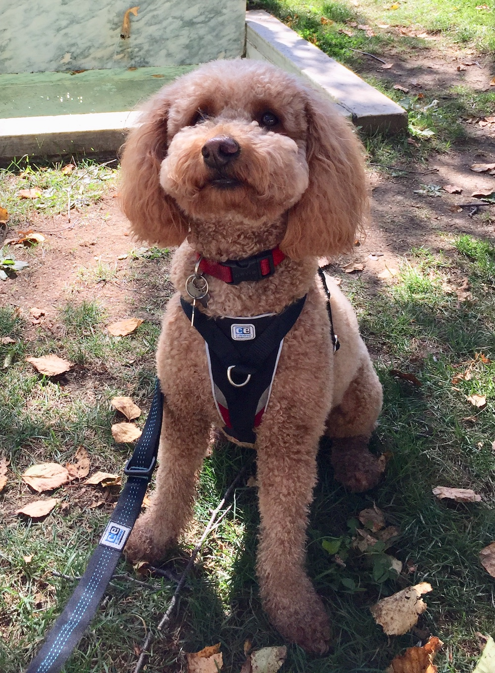 The training we received for my 2 year old pup has really changed our life for the better. Rocco has completely stopped barking at strangers at the door and through the car window. Having people over and driving are a million times less stressful (and embarrassing) now. Walking Rocco on leash is now a treat, instead of anxiety inducing. The simple strategies Rachel taught me have had profound effects. Before I worked with Rachel, I though recall was an impossible goal, but I have a new found confidence in myself and my dog while implementing the strategies Rachel has taught me…and they have been simple enough to pass along to my kids and husband so we can be consistent as a family. I would highly recommend Every Great Dog for you and your family. Rachel is approachable, down to earth, and fun to work with! - Meredith, Newton, MA