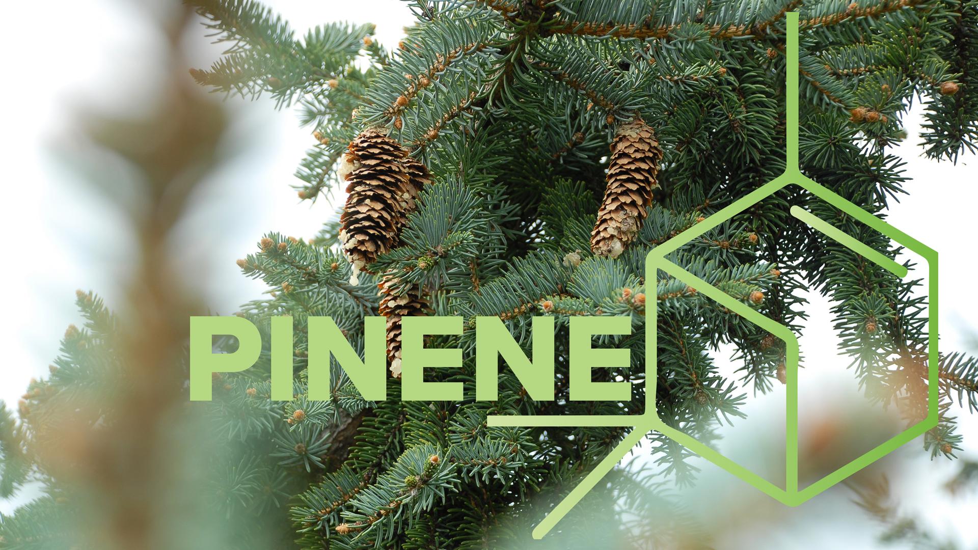 pinene.jpg