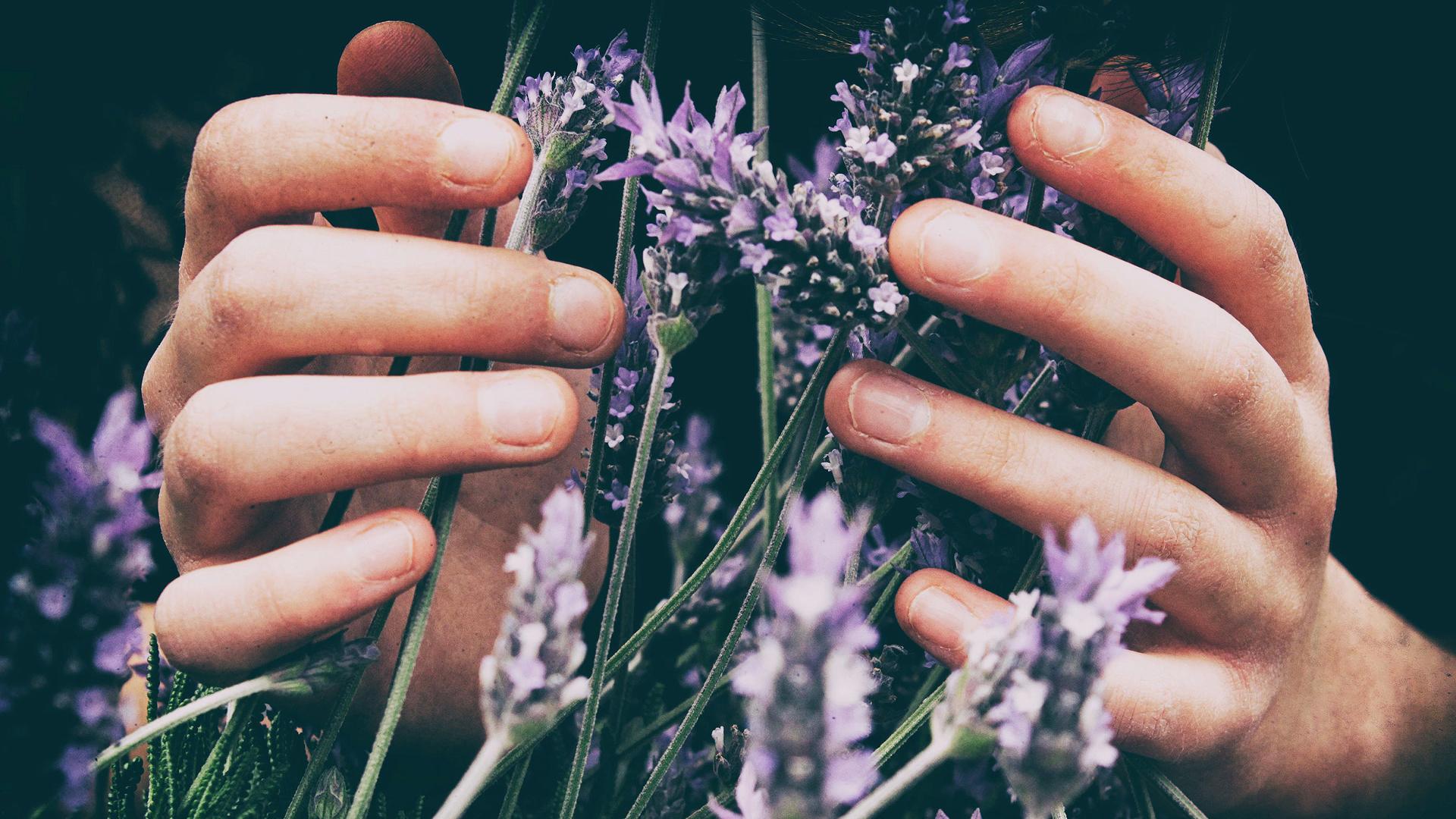lavendar_hands.jpg