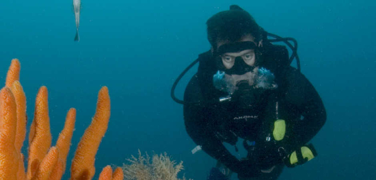 Success story - Supporting Healthy Coral Reefs