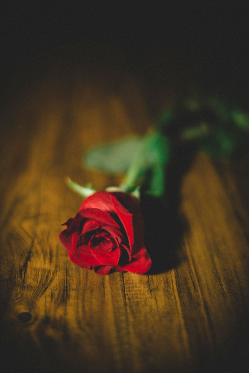 Monica-Galvan-Photography_Roses-are-Red-an-Experiment-in-Dramatic-Lighting_014