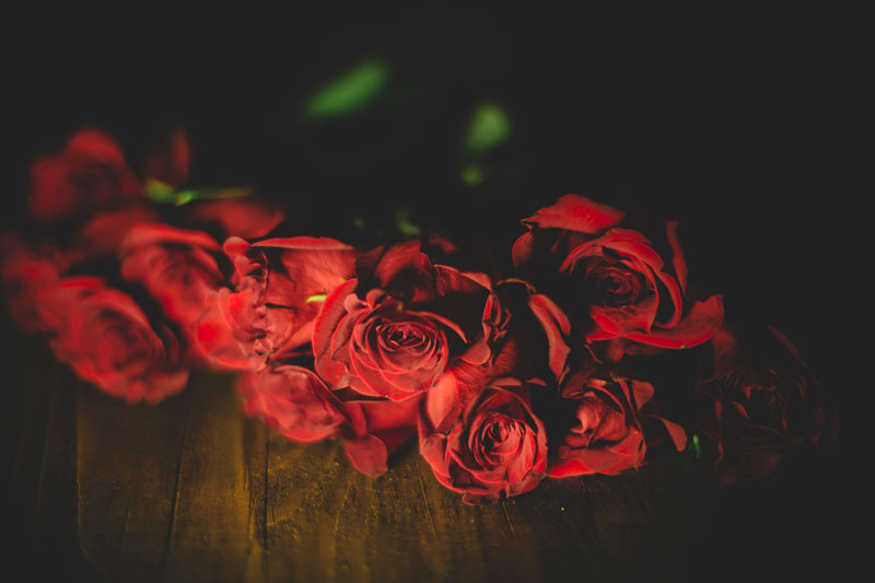 Monica-Galvan-Photography_Roses-are-Red-an-Experiment-in-Dramatic-Lighting_020