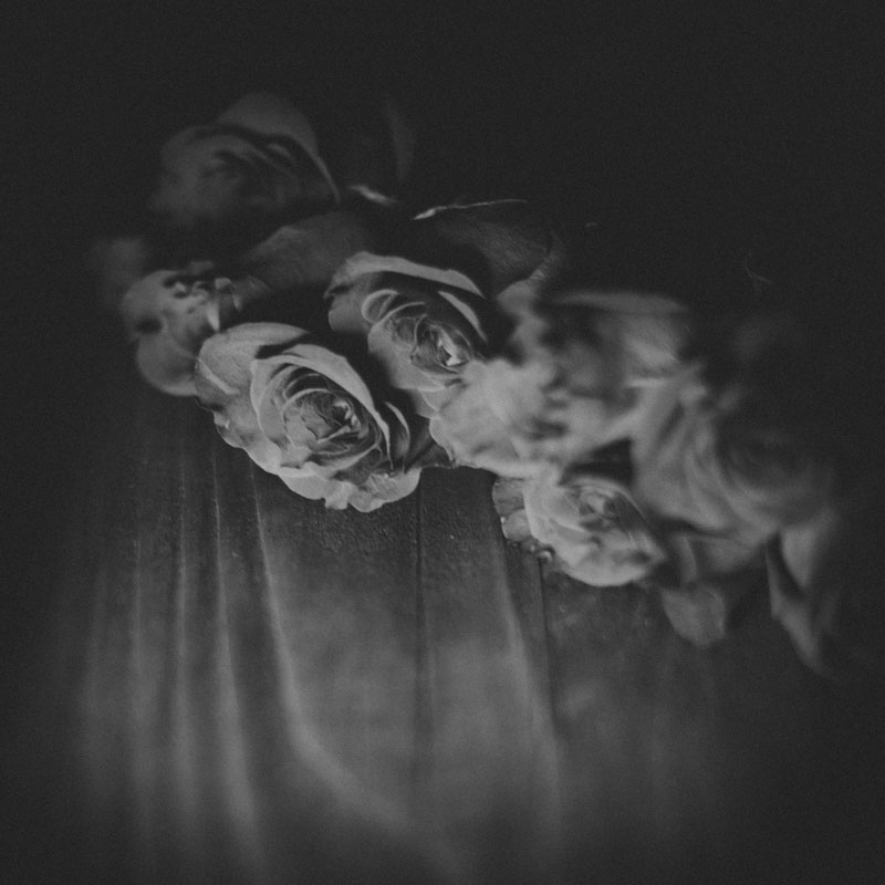 Monica-Galvan-Photography_Roses-are-Red-an-Experiment-in-Dramatic-Lighting_025
