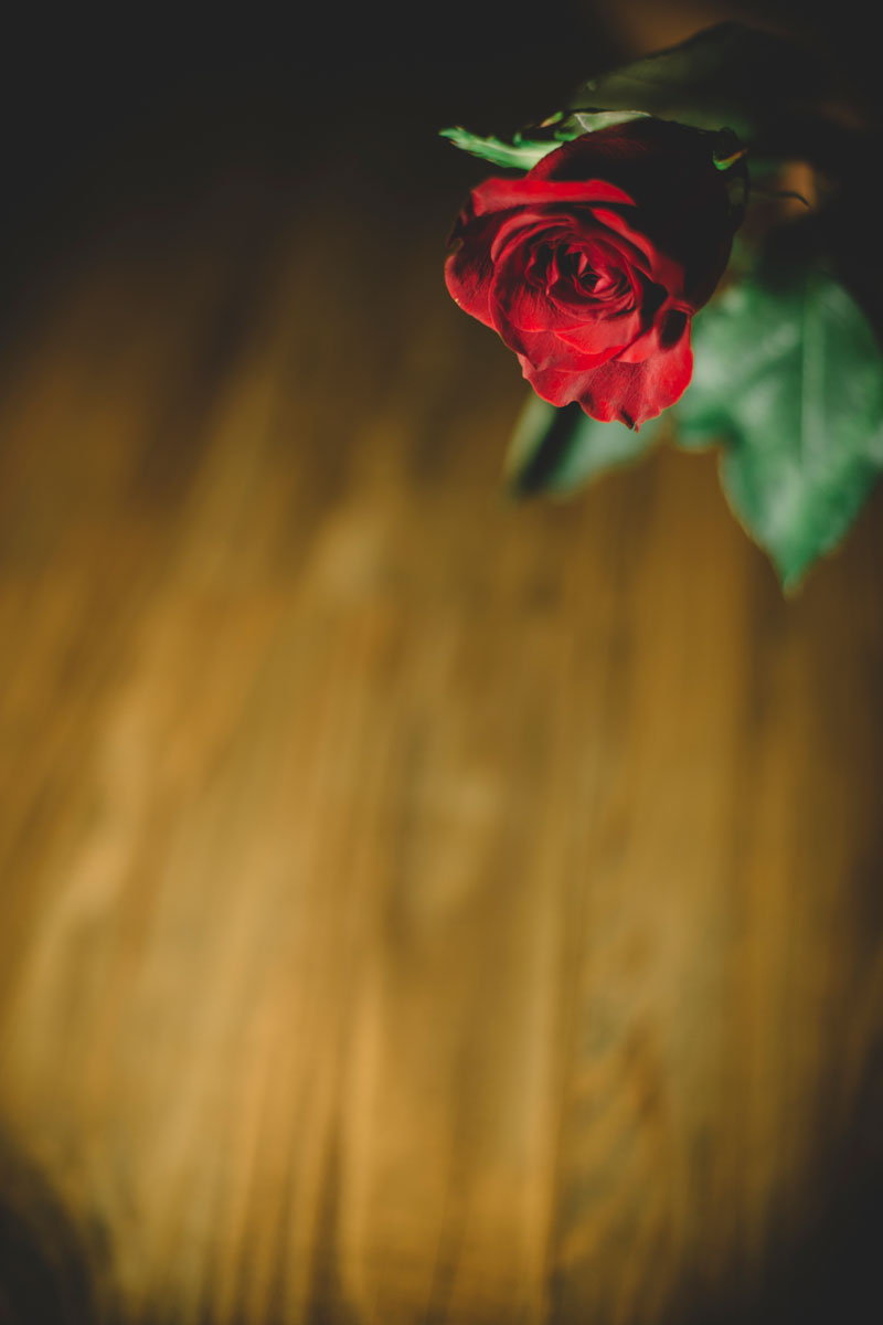 Monica-Galvan-Photography_Roses-are-Red-an-Experiment-in-Dramatic-Lighting_031