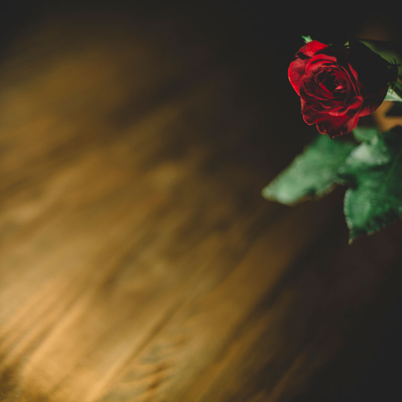 Monica-Galvan-Photography_Roses-are-Red-an-Experiment-in-Dramatic-Lighting_033