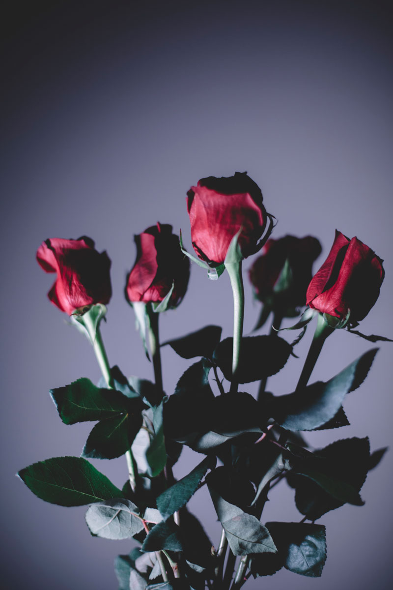 Monica-Galvan-Photography_Roses-are-Red-an-Experiment-in-Dramatic-Lighting_036