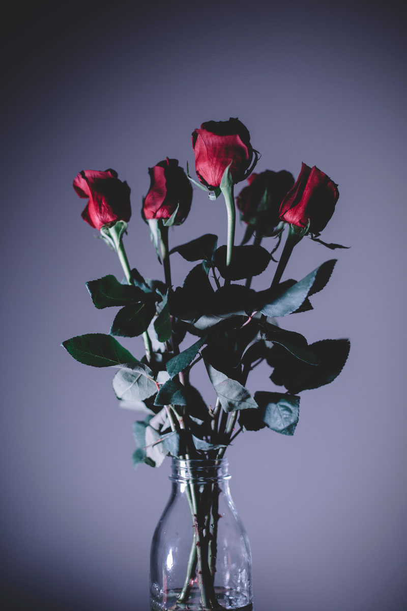 Monica-Galvan-Photography_Roses-are-Red-an-Experiment-in-Dramatic-Lighting_037