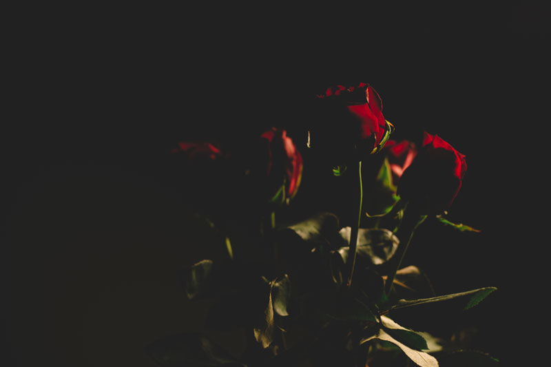 Monica-Galvan-Photography_Roses-are-Red-an-Experiment-in-Dramatic-Lighting_053