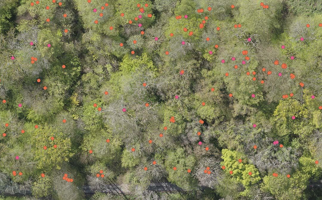 Traitement SIG - Ici, un relevé automatisé d'une parcelle forestière, accompagné d'une vérification de terrain par un géomètre