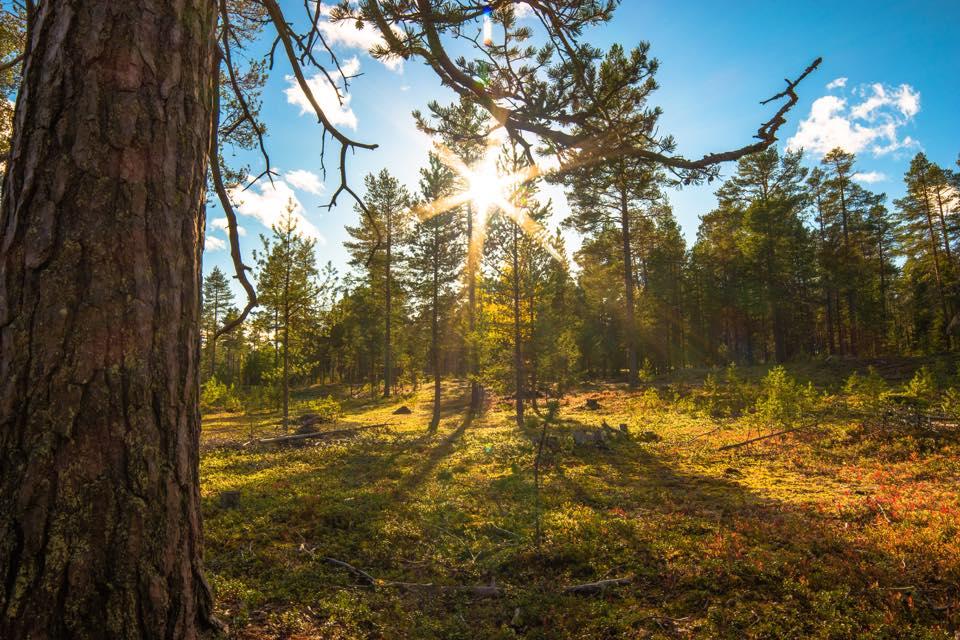 Gläntor & skog