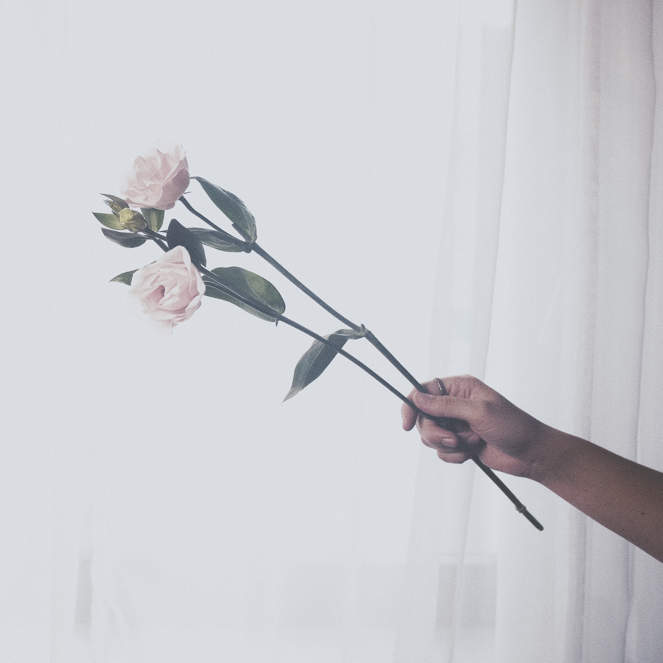 rose_sq.jpg
