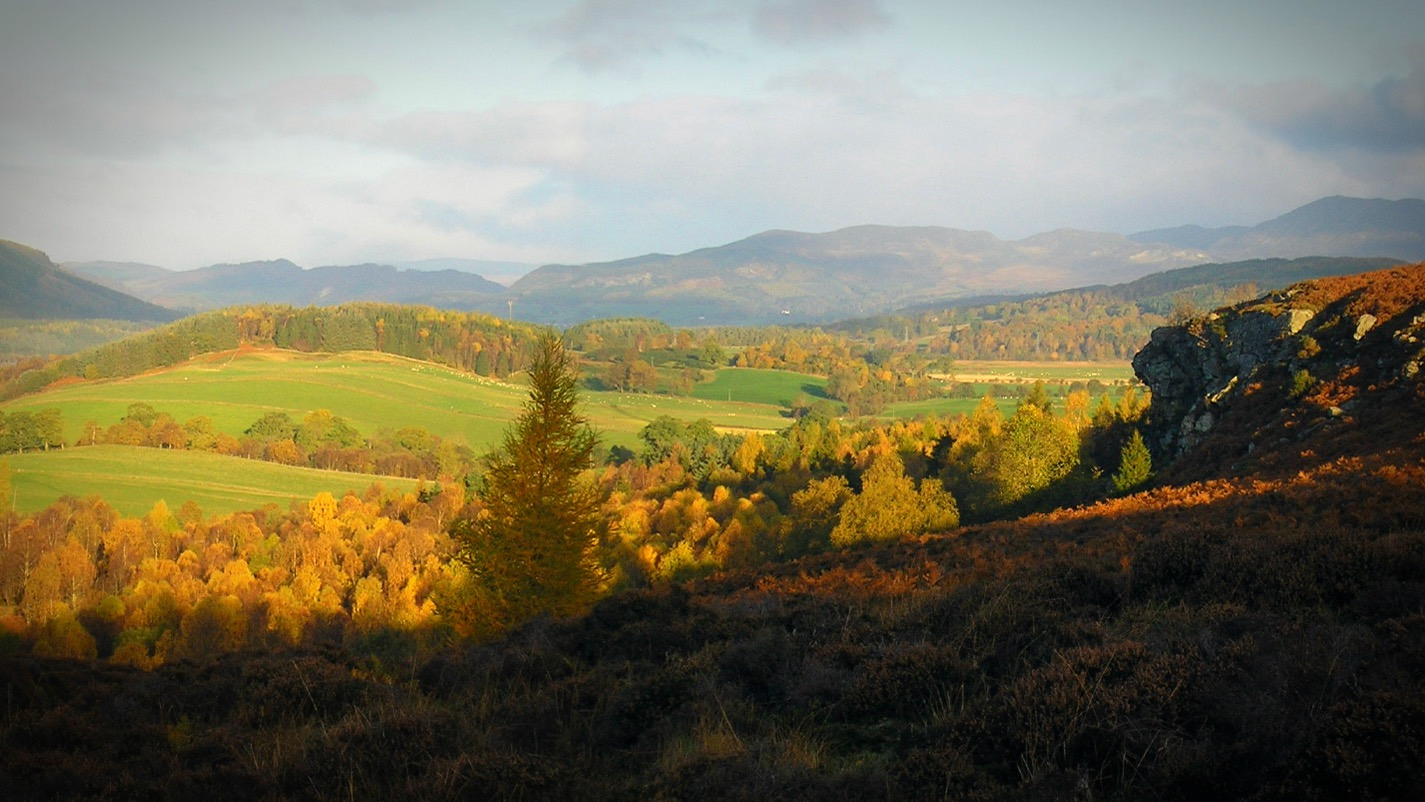 Perthshire Forest next to the wood hut workshop