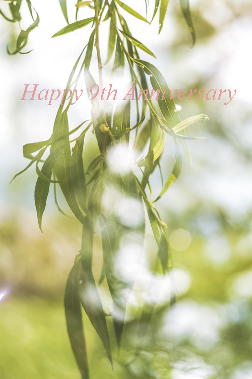 Willow Tree - Gifts made from Willow are traditionally exchanged to celebrate 9 years of marriage