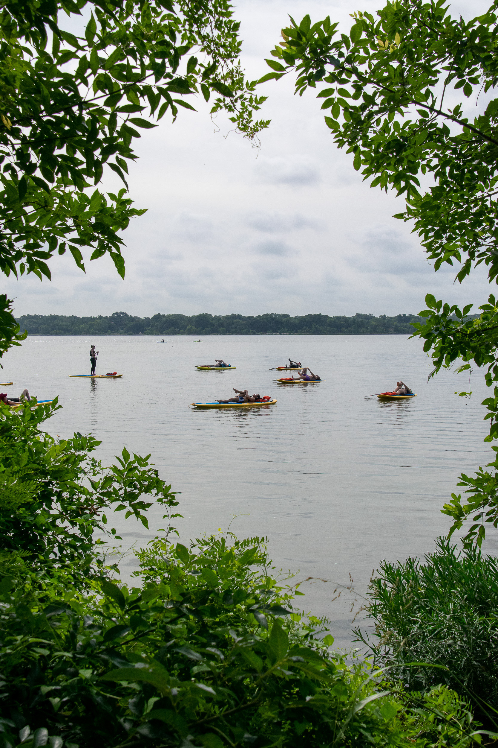 Yogis warming up on their paddle boards, as seen through the trees at White Rock Lake.