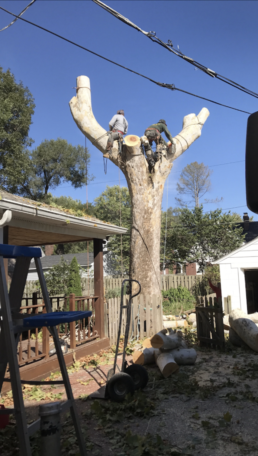 black-cherry-tree-service-full-service-tree-removal.png
