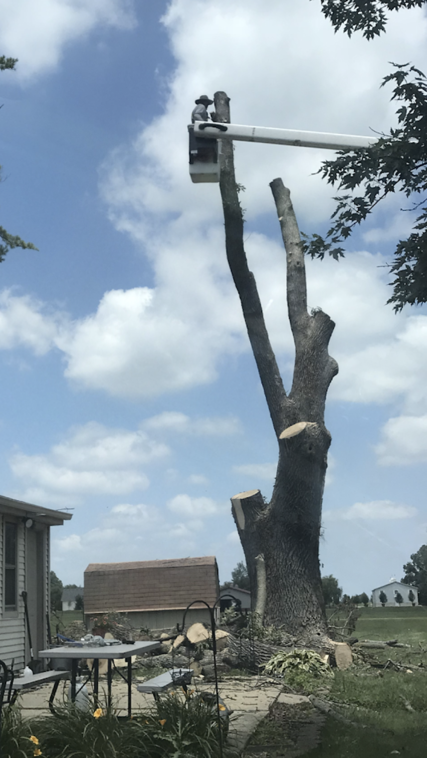 black-cherry-tree-service-tree-removal-bucket-truck-service.png