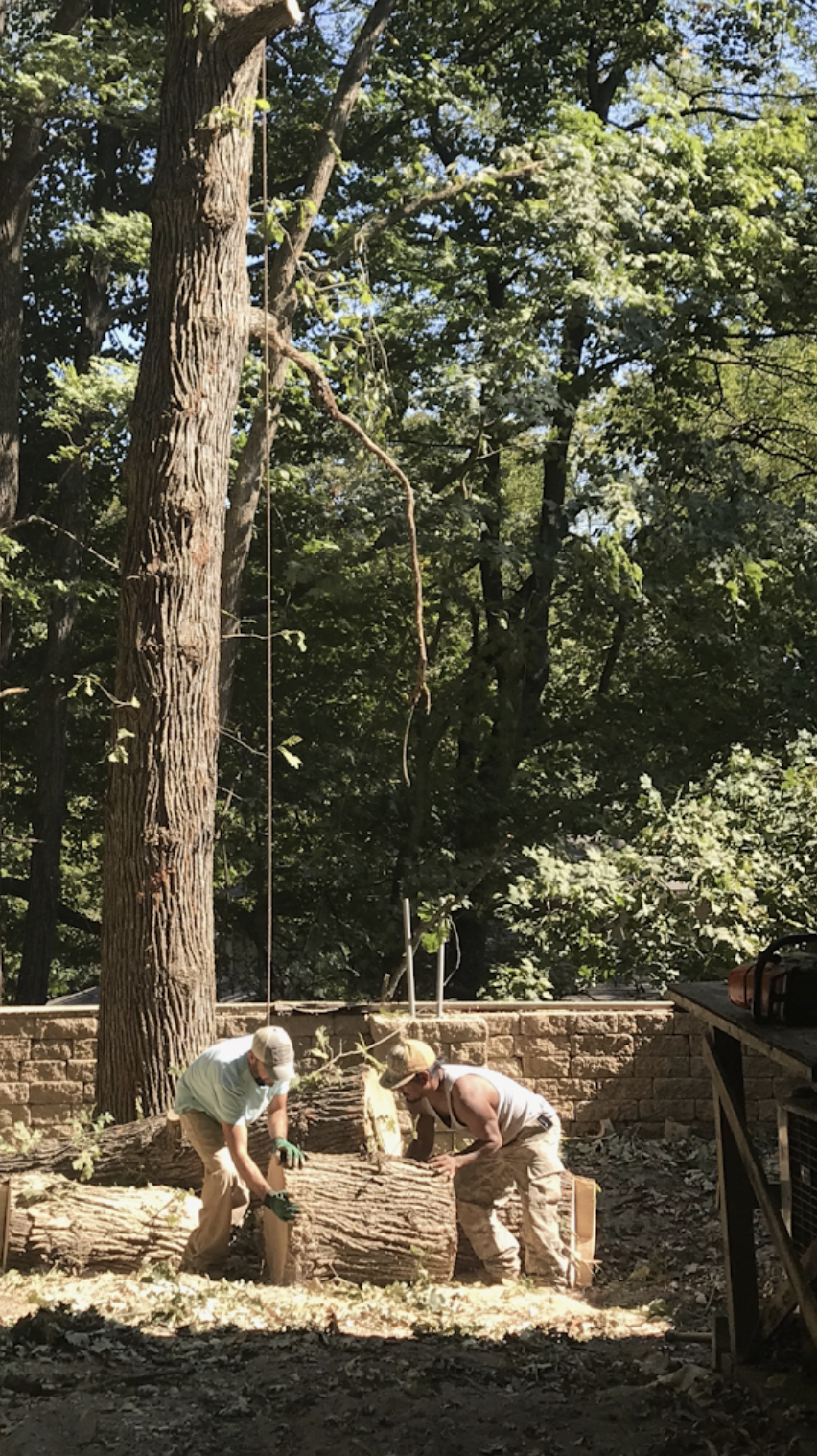 black-cherry-tree-service-tree-removal-cleanup.png