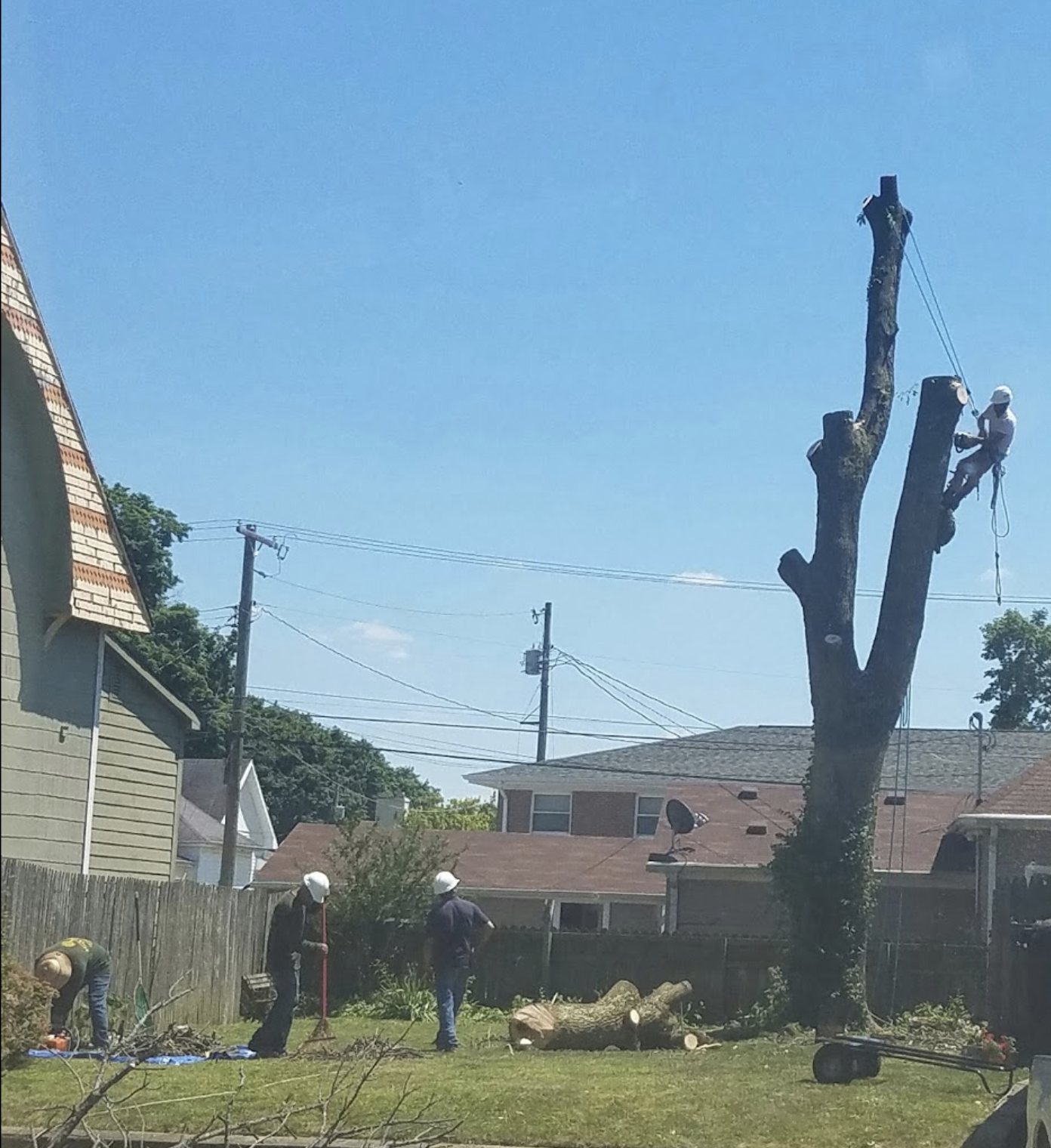black-cherry-tree-service-tree-removal-tree-trimming-branches.png