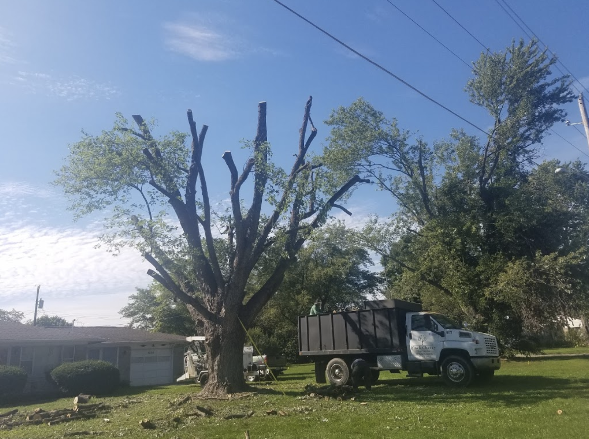 black-cherry-tree-service-tree-removal-truck-certified.png