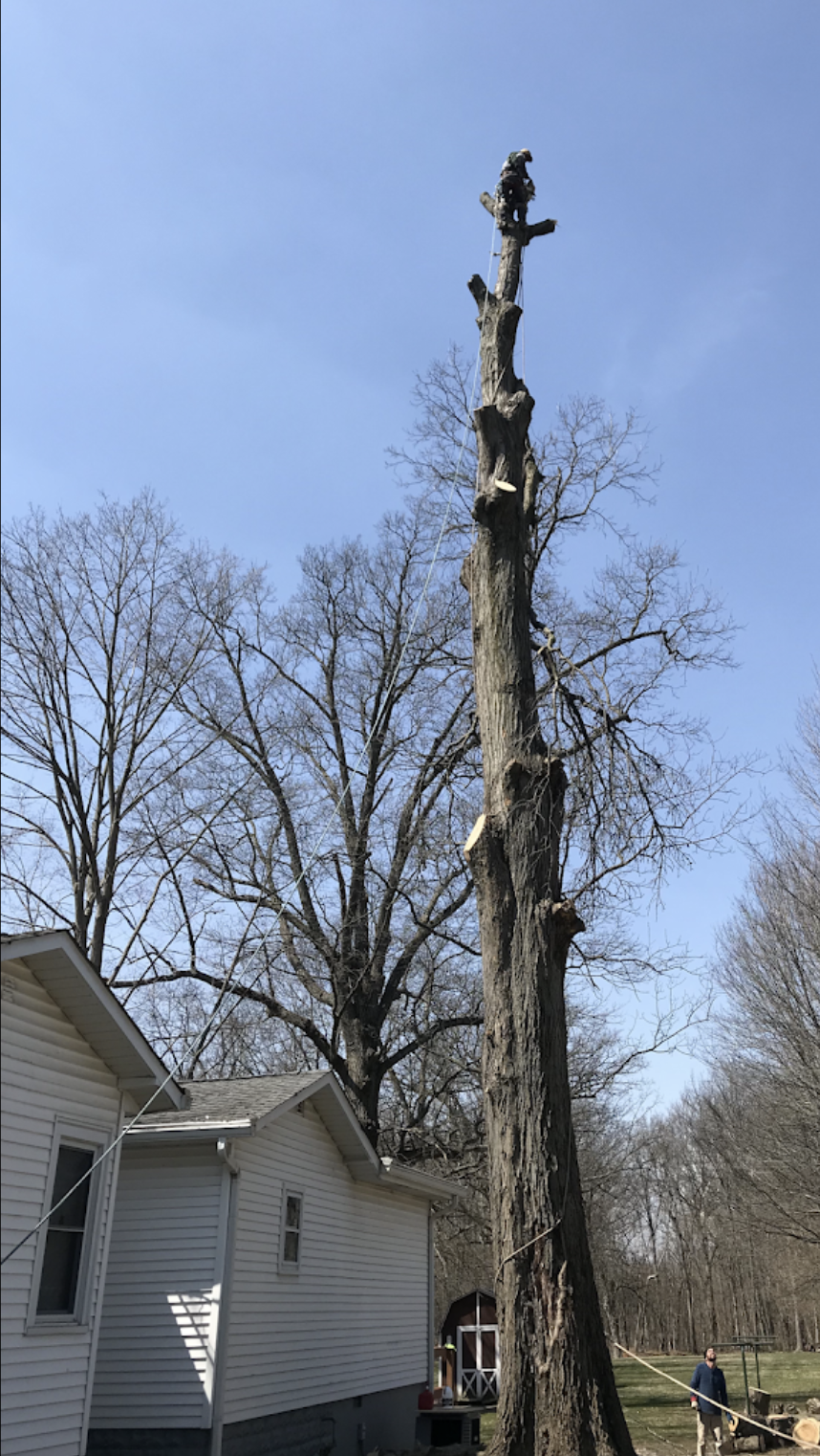 black-cherry-tree-service-tree-removal.png