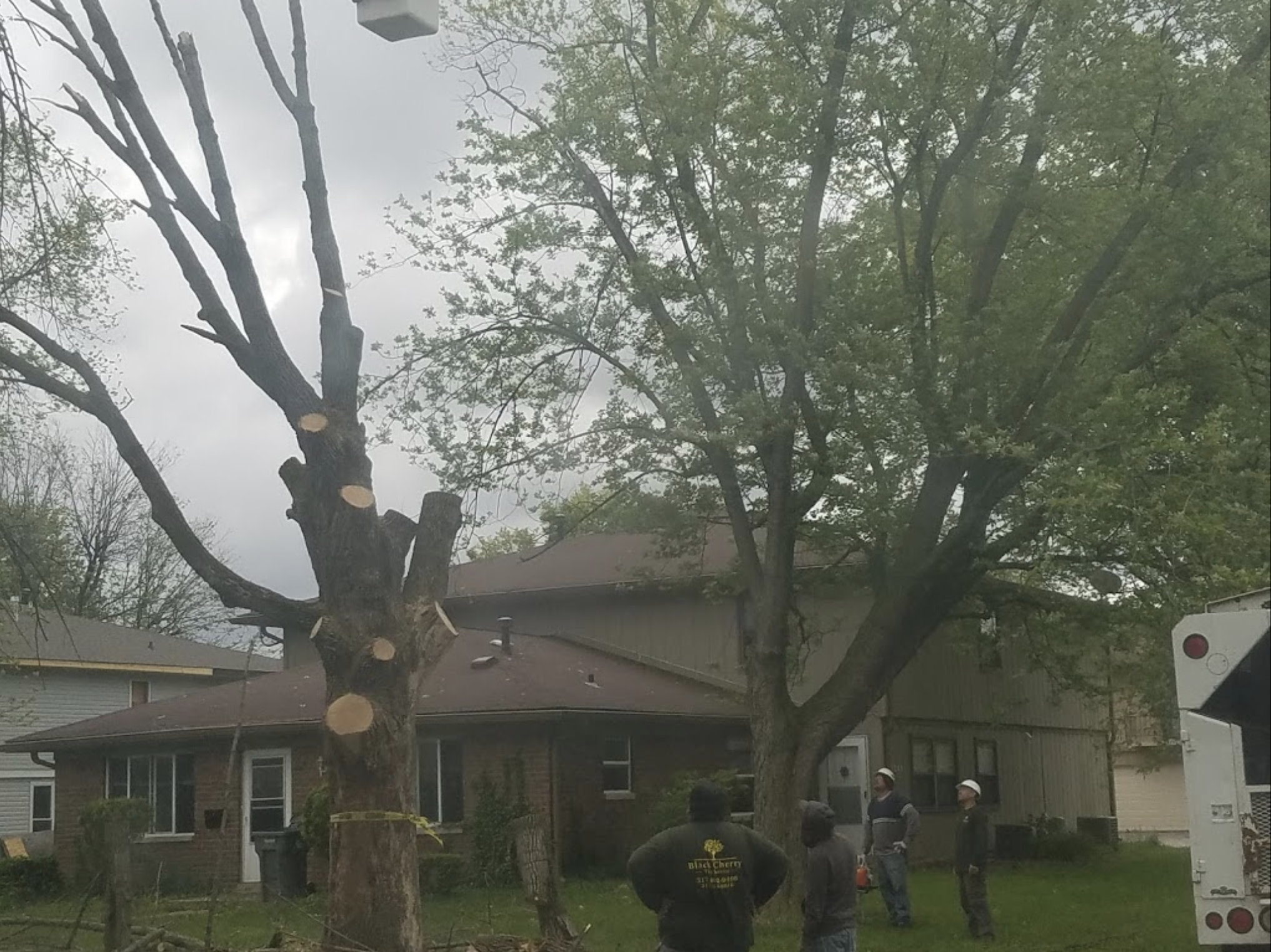black-cherry-tree-service-tree-trimming-removal.png