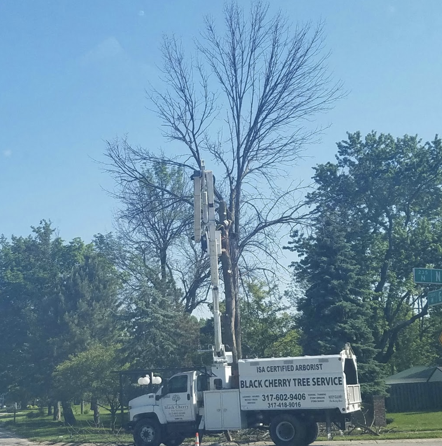 black-cherry-tree-service-truck-removal-licensed-insured.png