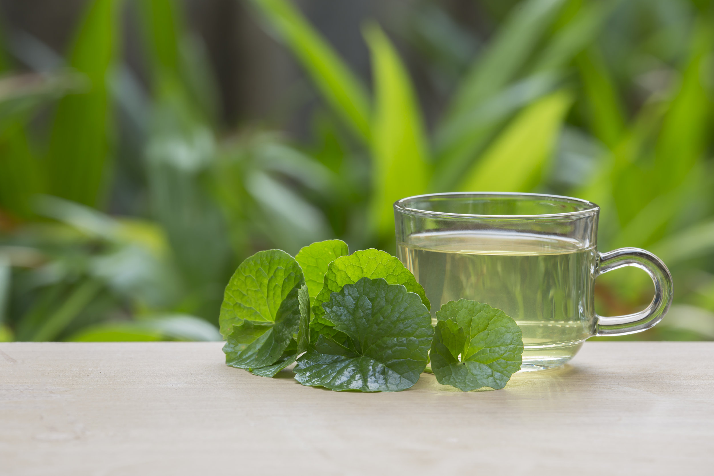 Organic Gotu Kola - It boosts the formation of collagen and skin tissue, which is crucial in maintaining the skin's elasticity and youthful glow. Another benefit that gotu kola is most known for is its ability to improve blood circulation.