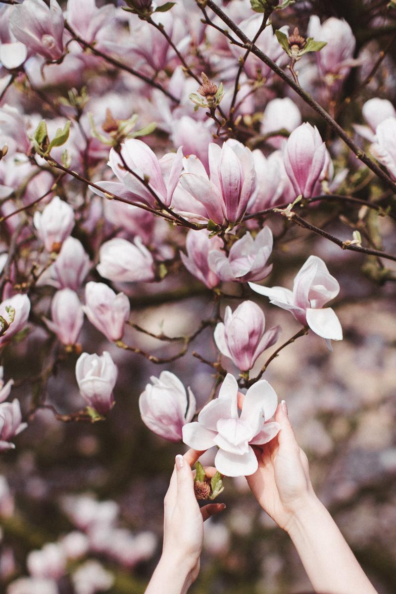 margaritacruz.art - 41 (blossom, magnolia, photosession, portrait)April.jpg