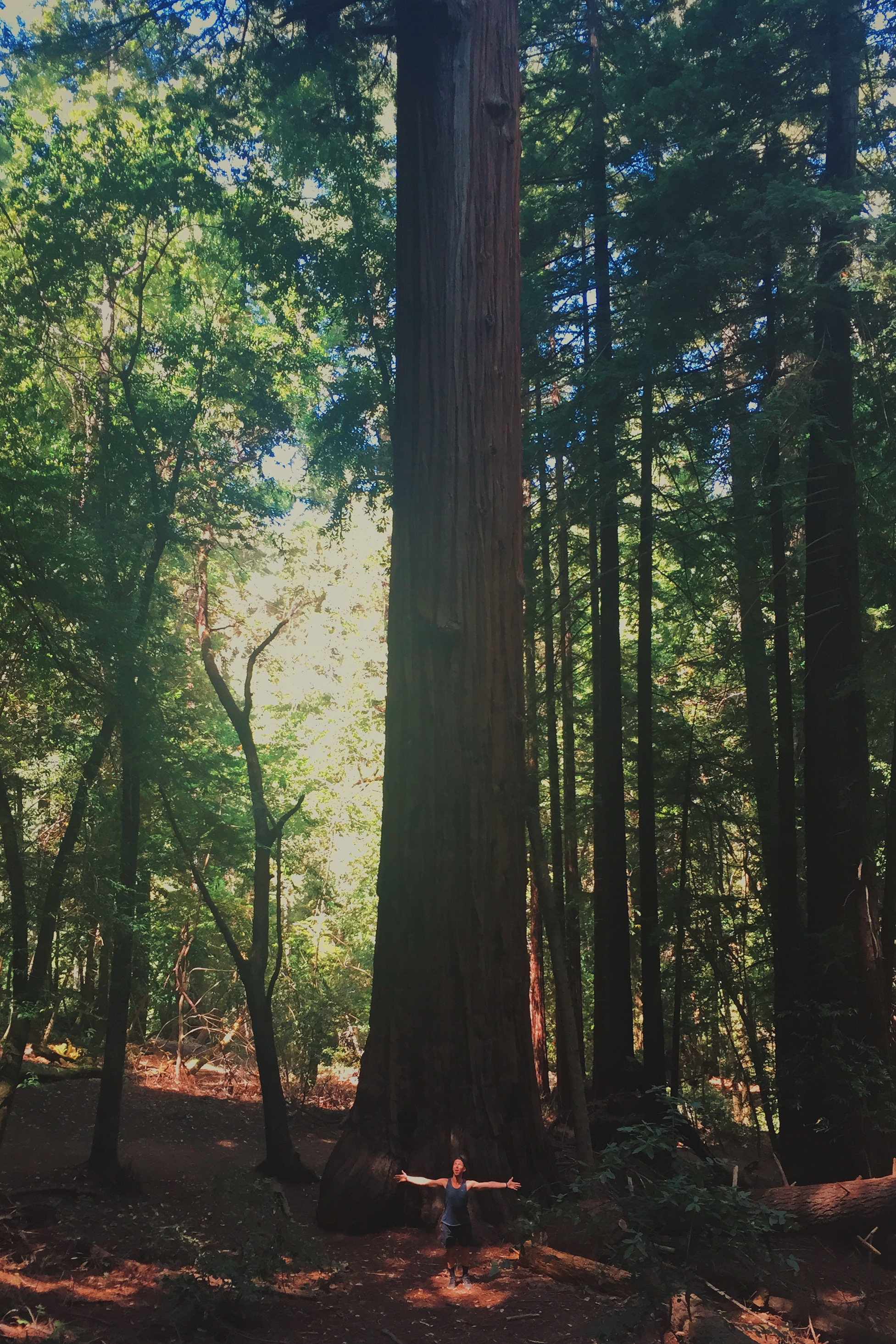 Shawn, Dry Farm Wines Creative Director, bathing in the majestic beauty of the giant Redwoods of Northern California