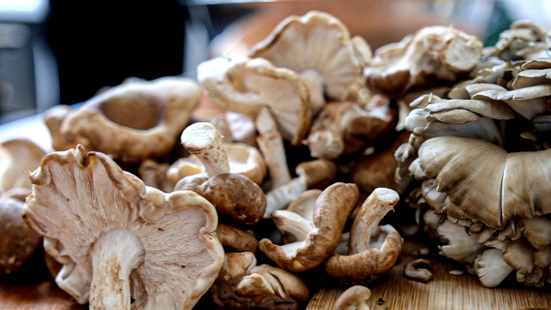 Mushsrooms-Macro-v1.png