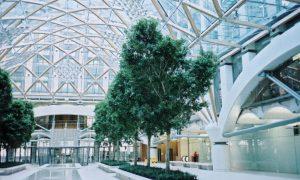 atrim-trees-0-00332EF900000258-464_1024x615_large-300x180.jpg
