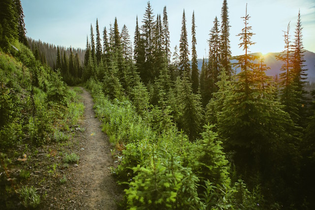 National Forests -